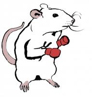 http://teaandink.co.uk/files/gimgs/th-12_boxingrat.jpg